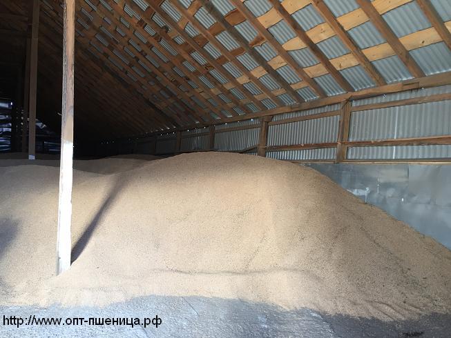 Пшеница 3,4,5 класса без пророста по ГОСТ. В наличии также Кукуруза, ячмень