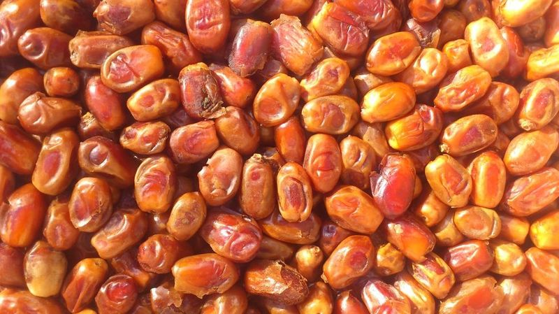 грецкий орех оптом