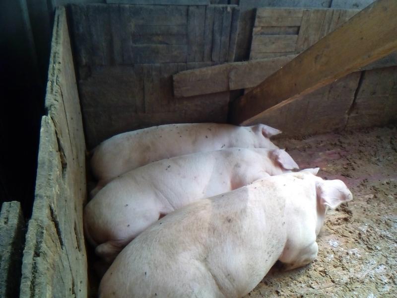 Деревенская свинина
