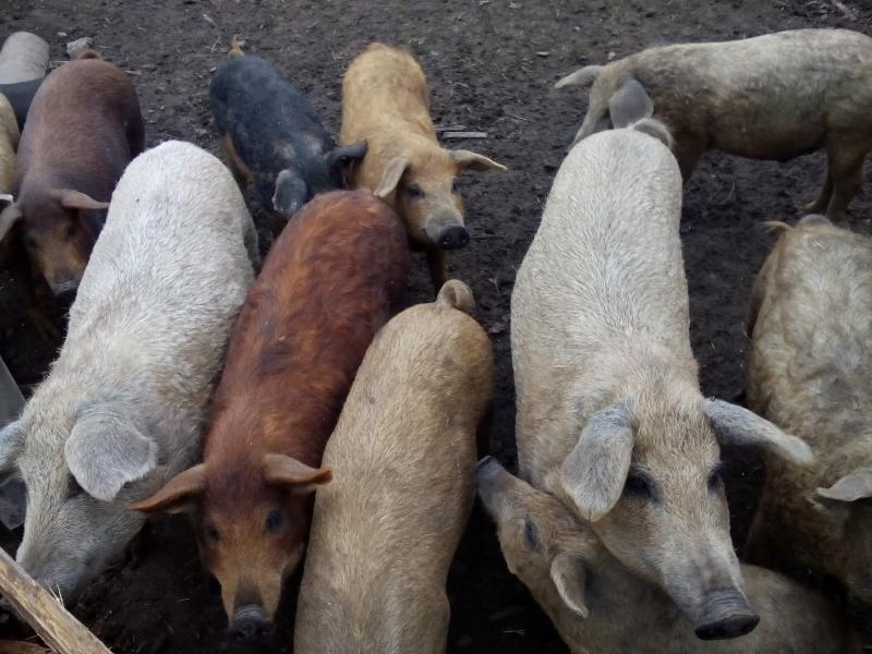 Мясо свиное