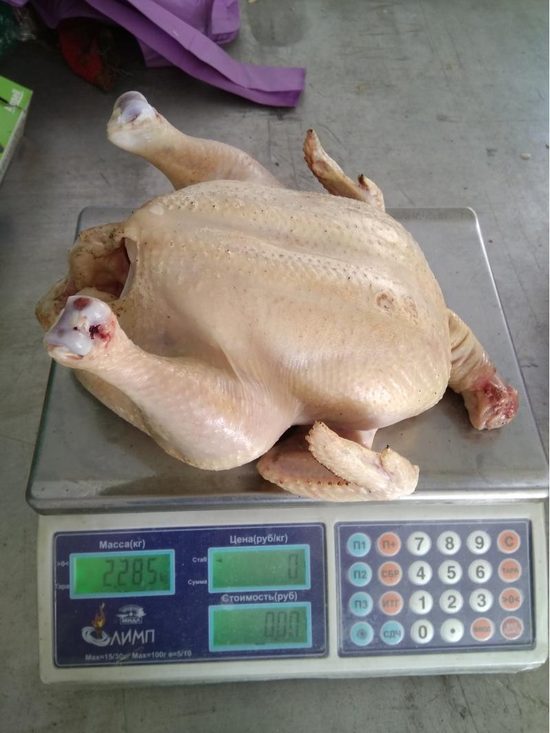 Домашнее мясо цыпленка бройлера