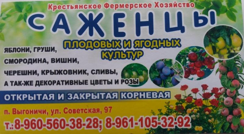 Плодово-ягодные насаждения
