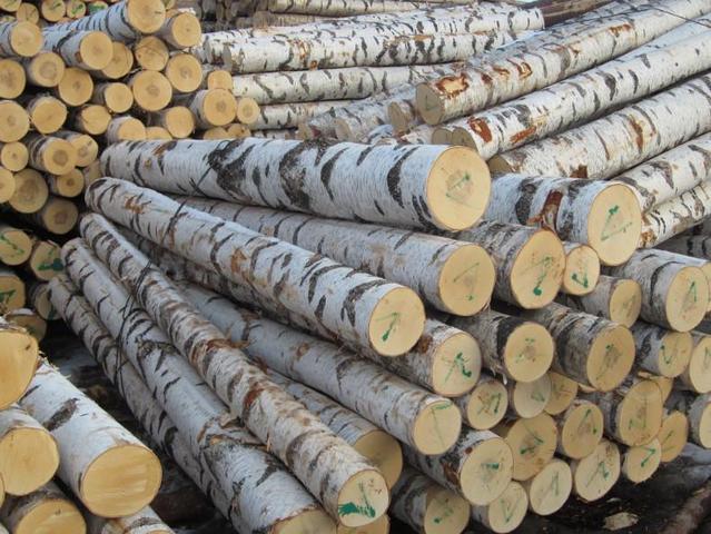 Купим пиловочник круглый лес береза, осина.