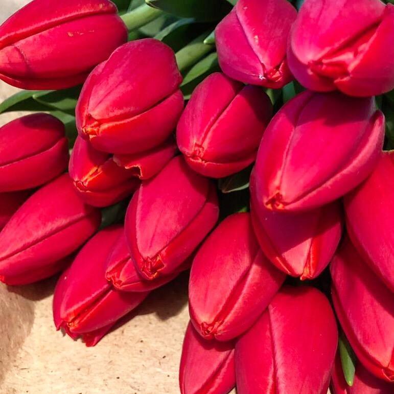 Тюльпаны оптом Новосибирск