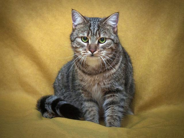 Полосатый зеленоглазый Митяй, ласковый домашний котик в добрые руки