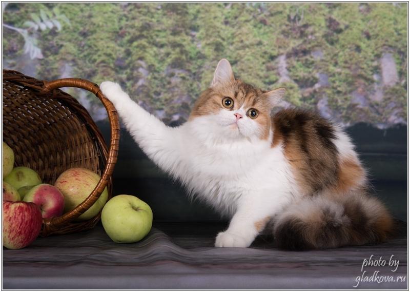 Красавица кошка в добрые руки