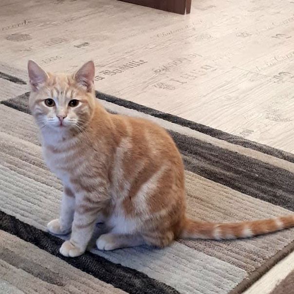 Мраморные котята Ватсон и Коржик в дар