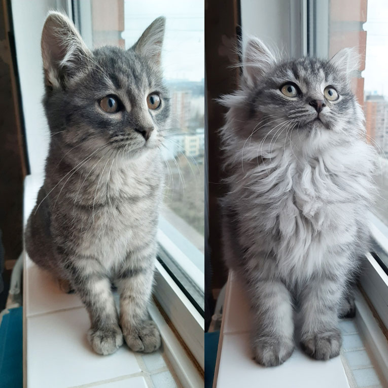 Братики-котята ищут дом