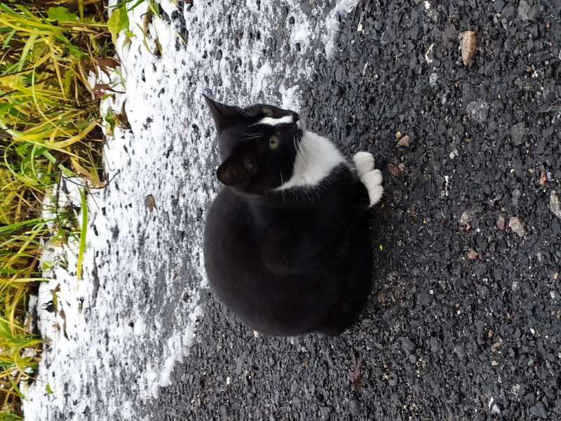 Котнок
