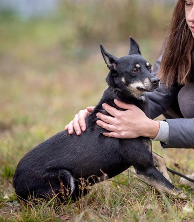 Маленькая собачка Бони в добрые руки. 35 см в холке