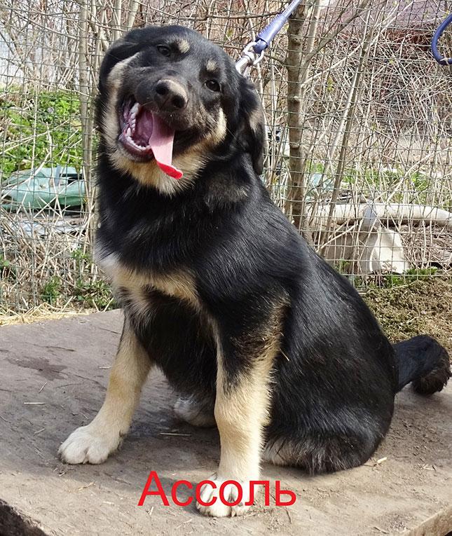 Отдам юную, улыбчивую собаку Ассоль в хорошие руки