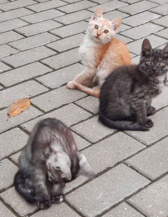 Котята очень красивых окрасов в добрые руки