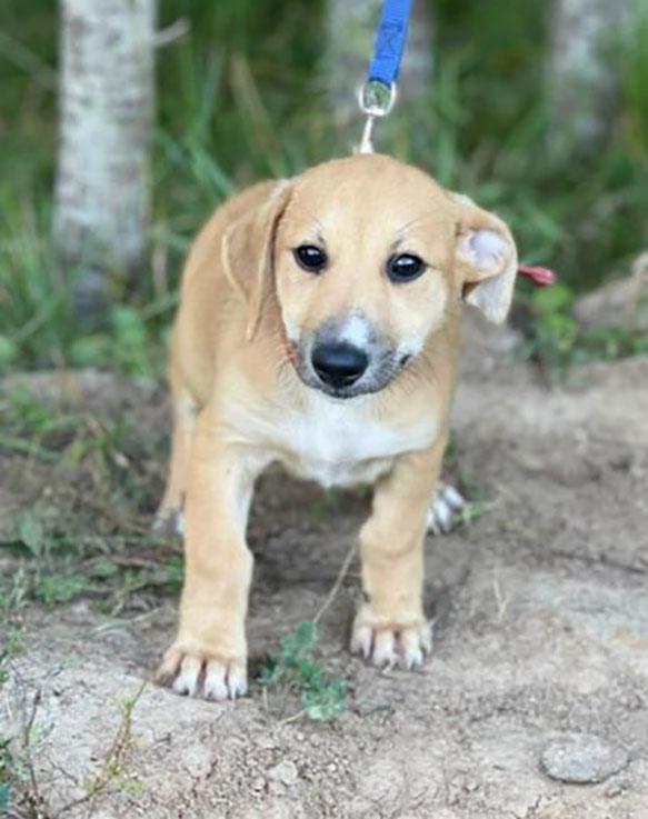 Некрупный щенок Эля на коротких лапках в дар